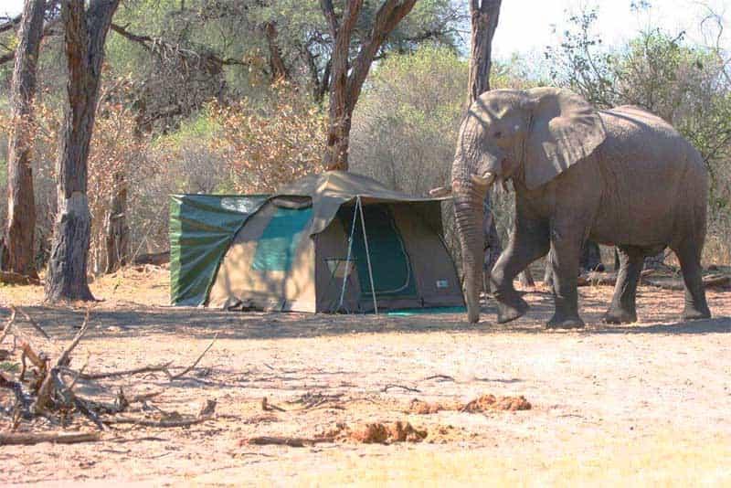 Botswana Livingstone Safari