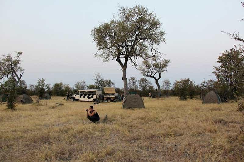 Northern Safari