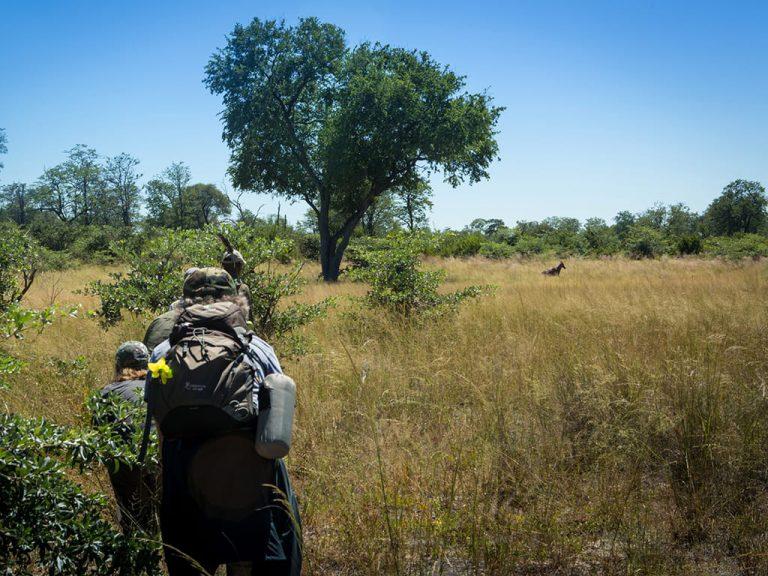 great-plains-conervation-selinda-adventure-trail-gallery-16